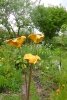 HoweOrangeplantformweb